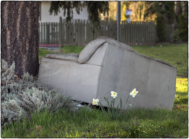 Dead Couch & Daffodils