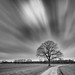 Streaming Tree by frank_w_aus_l