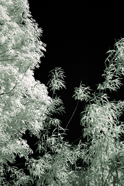 IR-trees