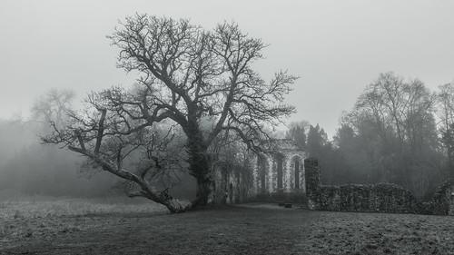 mistymorning monochrome mono trees lonetree ruins waverleyabbey