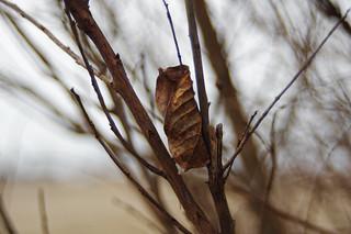 leaf | by pepperberryfarm