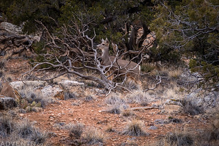 Oh Deer! | by IntrepidXJ