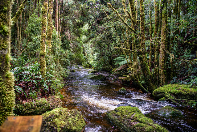 On the way to Russell Falls, Tasmania