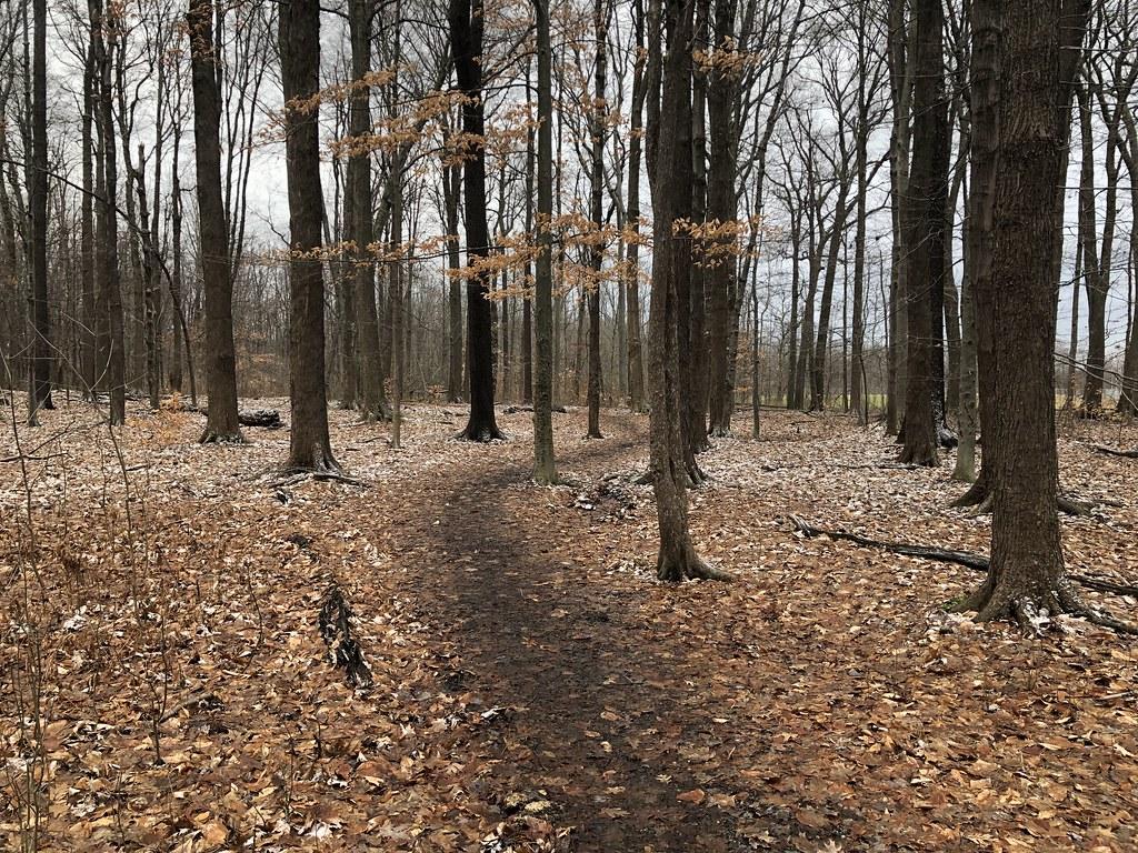 Trail Runs.