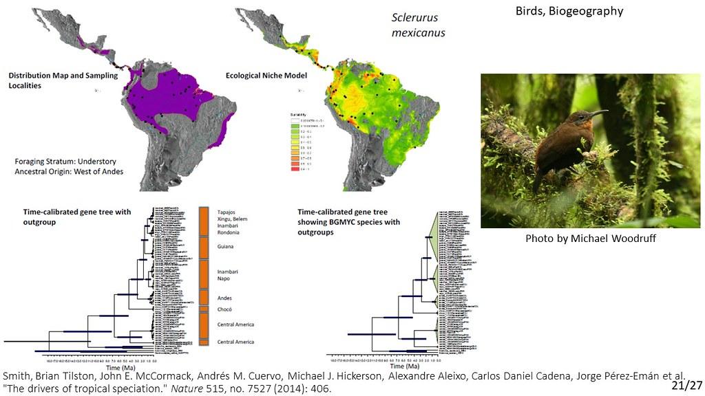 Smith et al. 2014 - Sclerurus mexicanus