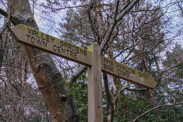 Valley Gardens, Harrogate - 10