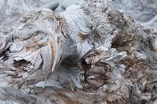 Dead Wood, Pacific II