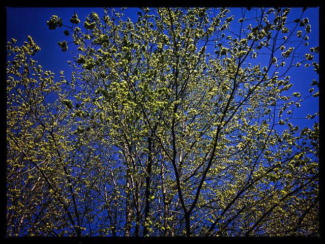 Spring_2048px