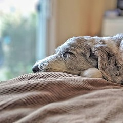 When Squirrel watch time overlaps with nap time... 💤💤💤