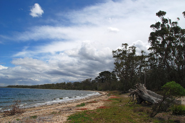 Downtime Down Under - Looking Along the Shoreline at Raymond Island