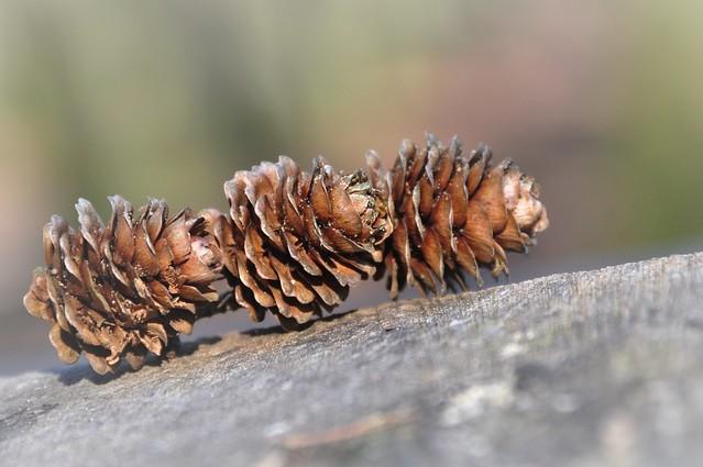 Threesame in nature
