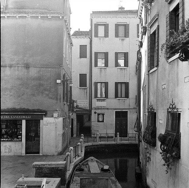 mongrel (venezia 100)