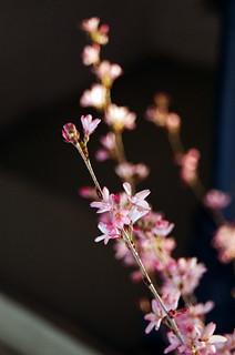 Spring blooms, macro   by Jim Grey