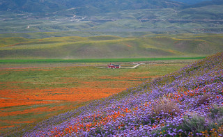 a red farm house in the spring wonderland   by Paulie 潘