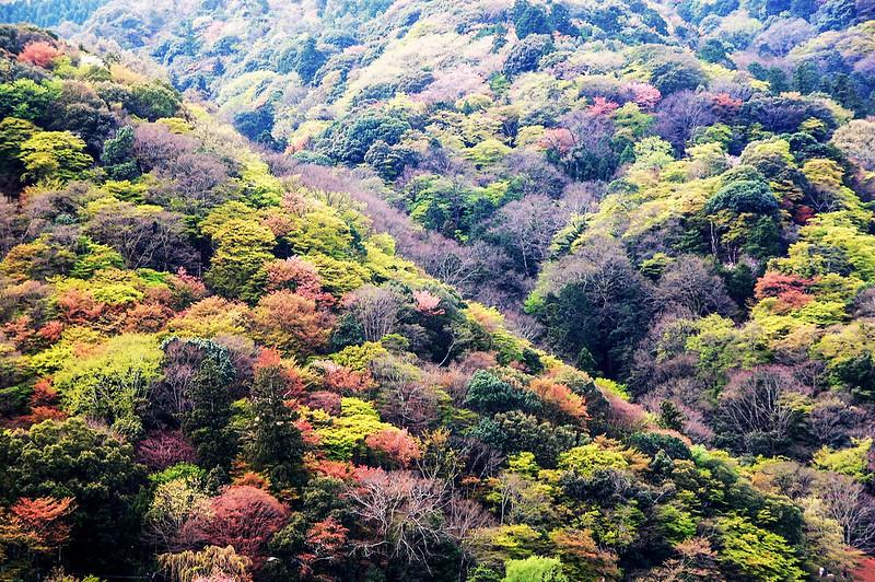 嵐山山景 1