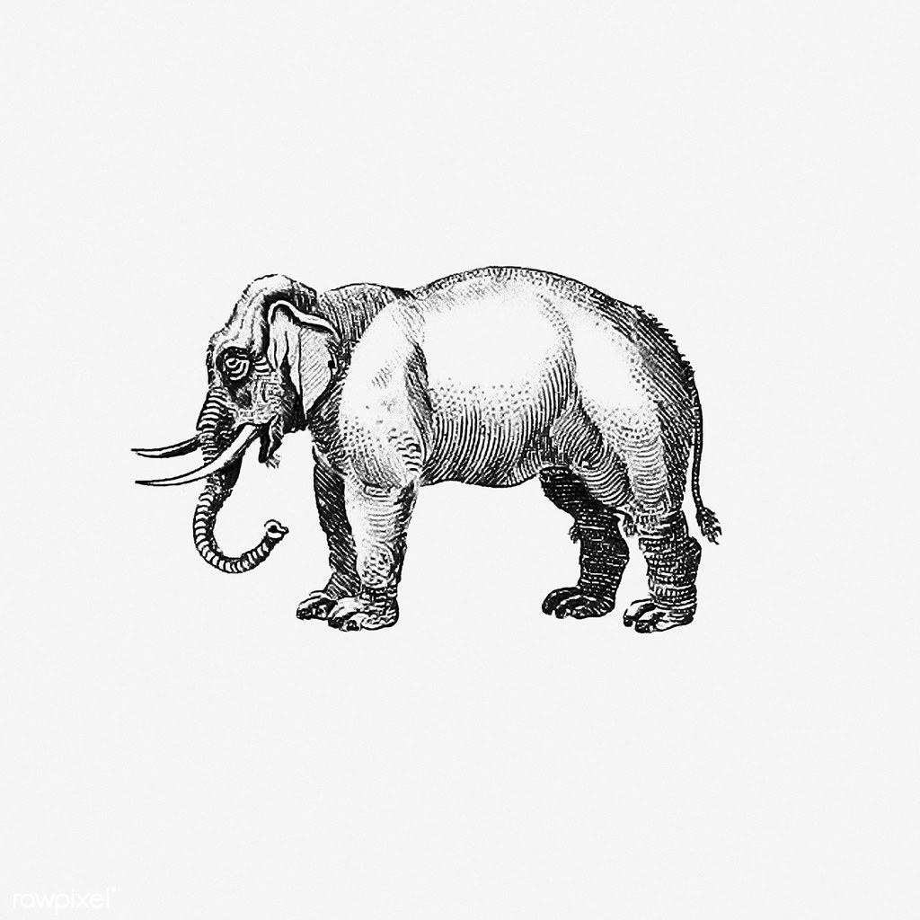 Vintage Elephant Illustration Free Download Under Cc Attri