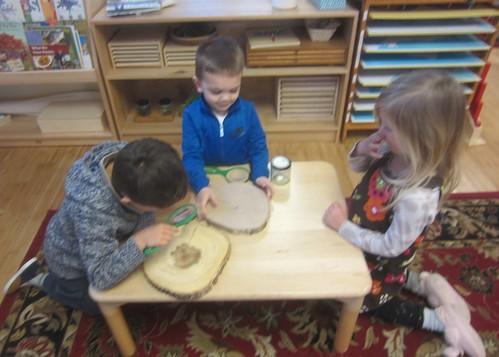 examining the tree cookies   by lyn.schmucker