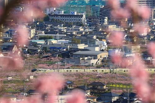TRAIN SUITE SHIKI-SHIMA, 四季島 | by kimuchi583