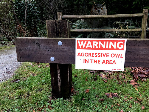 Aggressive Owl Doesn't Give a Hoot