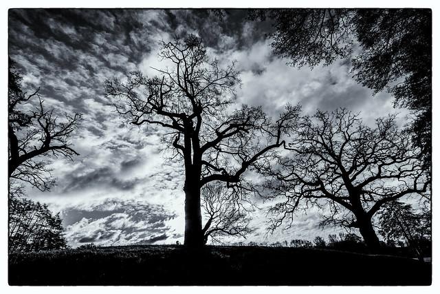 Trees go sky