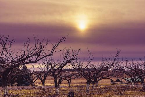 sun sky landscape tree purple sunset