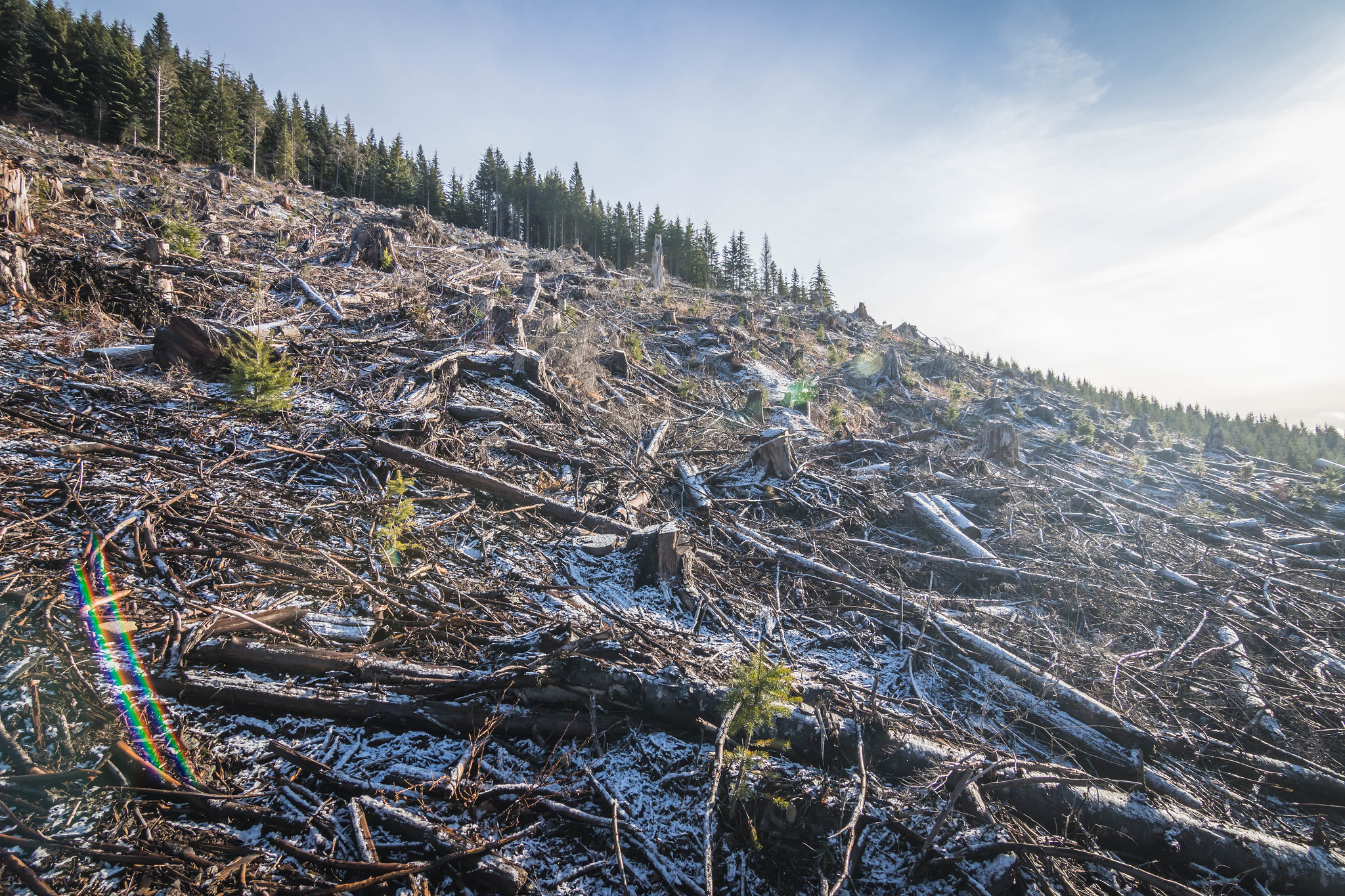 The logging debris