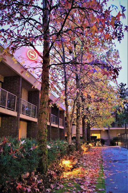 Sheraton Vancouver Airport Hotel - DSC00269-22