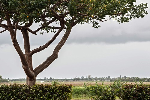 nikon d3200 farmland cloudy
