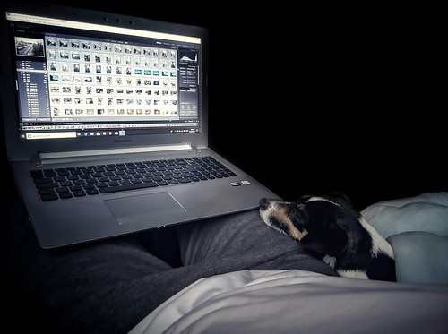 1/365 Lightroom Work with Bella :-) | by Charlie Little