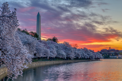 washington washingtonmonument monument districtofcolumbia dc cherry bloom blossom festival nps tidal basin water reflection sky sun sunrise cloudsstormssunsetssunrises nikon nikond850 d850 adobe adobelightroom hdr skylum aurora sirui tripod