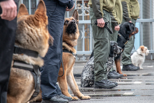 EUAM donated vehicles for sniffer dogs
