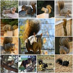 my best pix of squirrels (2008-2018)