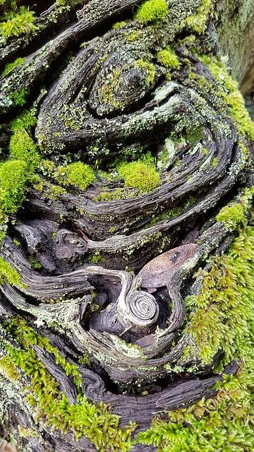 Part of a tree stump, hosting moss - Explore!