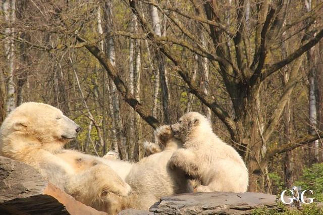 Besuch Tierpark Friedrichsfelde 06.04.201979