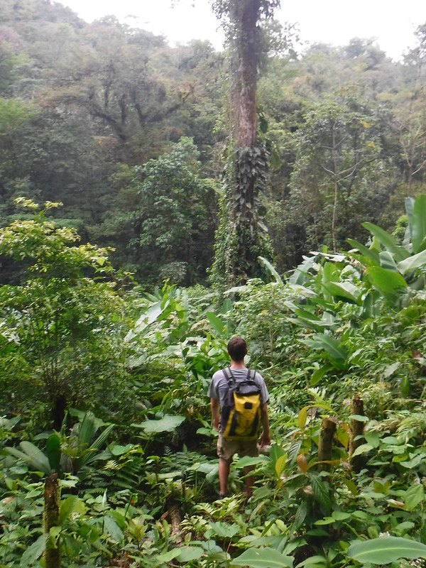 Jungle Hike, Rio Bonito, Guatemala