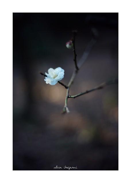 2019/2/23 - 17/21 photo by shin ikegami. - SONY ILCE‑7M2 / Voigtlander NOKTON CLASSIC 40mm f1.4 SC VM