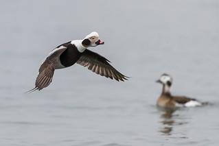 When Birds Bounce  3I9146 | by Dr DAD (Daniel A D'Auria MD)