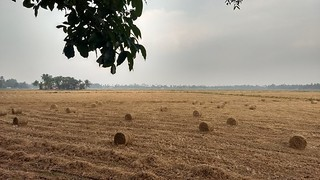 Harvest snaps | by Abraham Jacob N