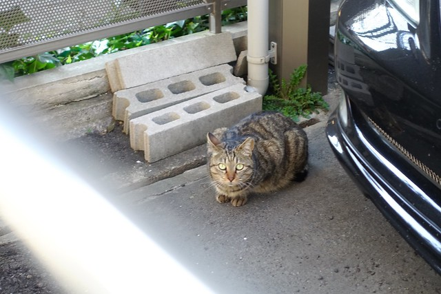 Today's Cat@2019-04-04