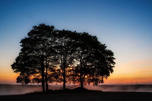 fivetrees trees five raitschin upperfranconia germany landscape sunset bluesky mapletree landschaft oberfranken deutschland sonnenuntergang ahorn