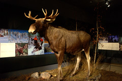 Museu Arktikum