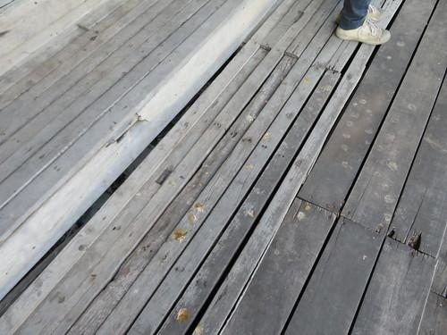 チェンマイ競馬場のハト糞