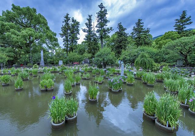 Pond of Iris (太宰府天満宮)