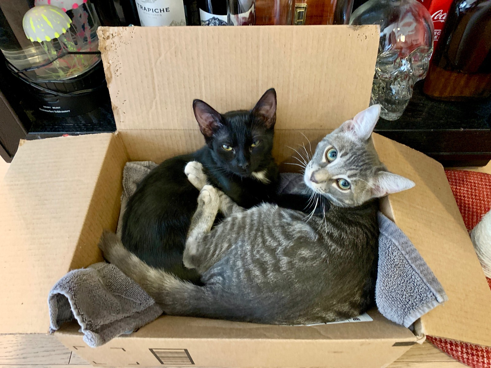 Matilda and FOMO in a Box