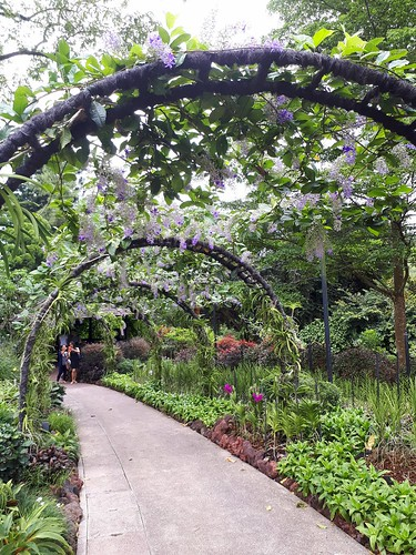 City Girl City Stories: National Orchid Garden   by citygirlcitystories