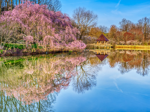 meadowlark virginia cherryblossoms cherrytrees landscape spring sunrise water