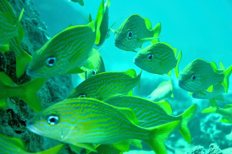 Aruba scuba shots videos 1468