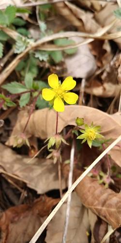 우지네골 봄꽃 산책길 | 양지꽃
