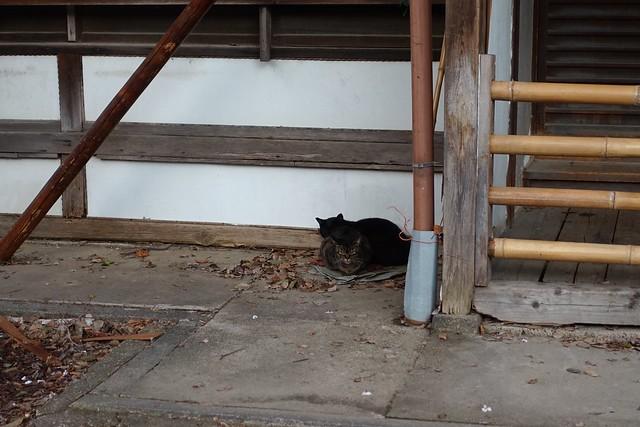 Today's Cat@2019-04-07