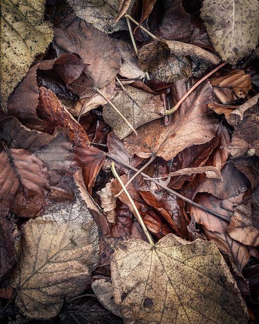 forest floor | the Birks of Aberfeldy | Perthshire
